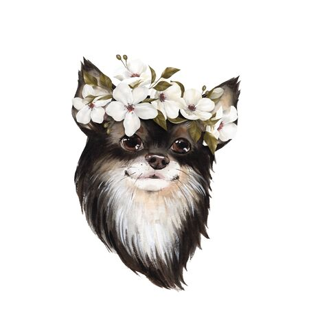 Puppy Chihuahua in wreath of white flowers