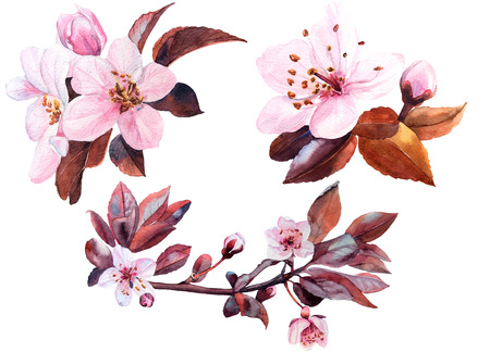 thea: cherry flower watercolor set