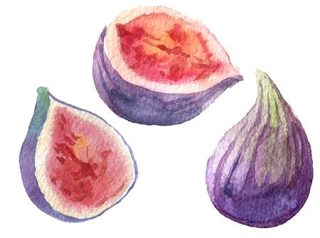 fig: watercolor fig set