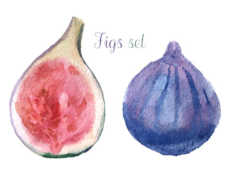 fig: watercolor fig set
