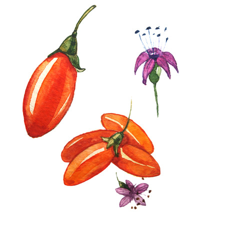 watercolor goji berry for weight loss Imagens