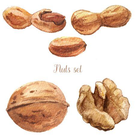 watercolor nuts set