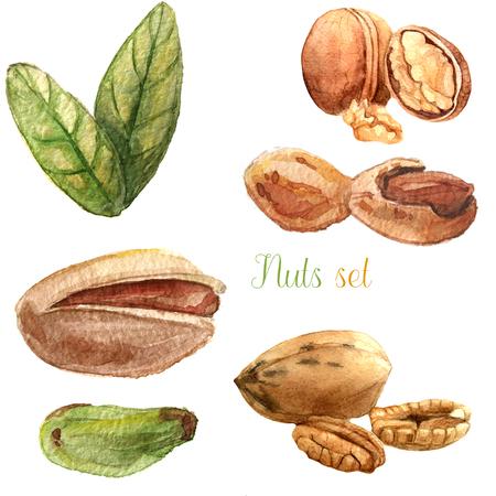 Nuts watercolor set