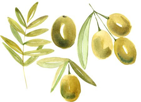 olive watercolor set Stock Photo