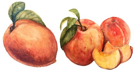 Peach watercolor set