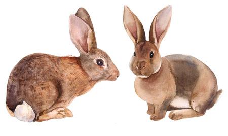 Watercolor bunny rabbit set Standard-Bild