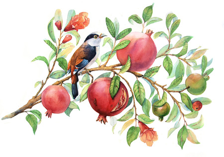 watercolor pomegranate branch