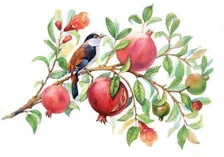 watercolor pomegranate branch 版權商用圖片 - 62059223