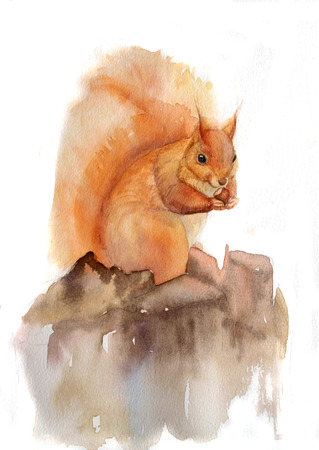 nature one painted: watercolor squirrel