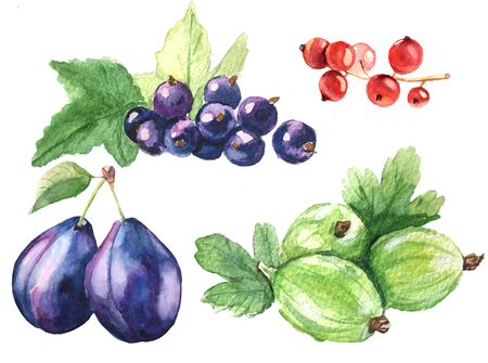 berries watercolor set