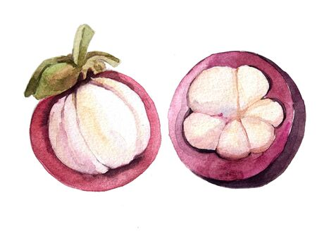 watercolor mangosteen set Stock Photo
