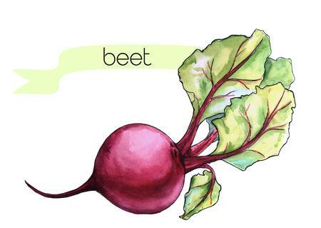 frash: Watercolor hand drawn frash beet. Isolated organic natural eco illustration on white background