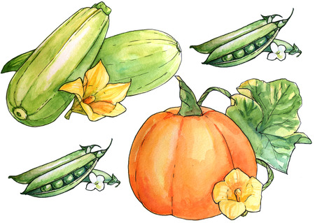 Acquerello disegnata a mano set di verdure. Isolato organico illustrazione naturale eco su sfondo bianco Archivio Fotografico - 64705329