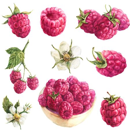 handdrawing watercolor set with jusy raspberry Zdjęcie Seryjne