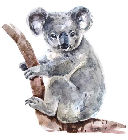 Australian watercolor koala Archivio Fotografico - 105149070