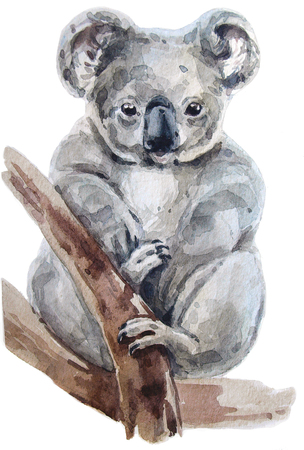 Australian watercolor koala
