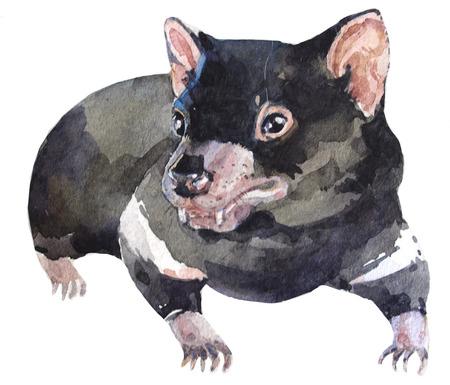 Australian tasmanian devil watercolor