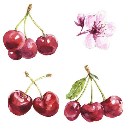 Watercolor cherries set Archivio Fotografico - 105149076