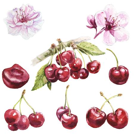 Watercolor cherries set Archivio Fotografico - 105149078