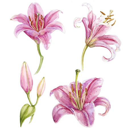 Watercolor pink lilies set Stock Photo