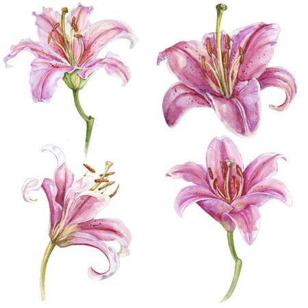 Watercolor pink lilies set Zdjęcie Seryjne