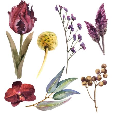 Watercolor maroon flower set Archivio Fotografico - 109202694