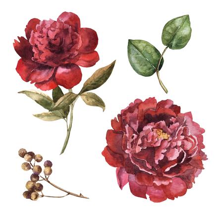 Watercolor maroon flower set Archivio Fotografico - 109202696