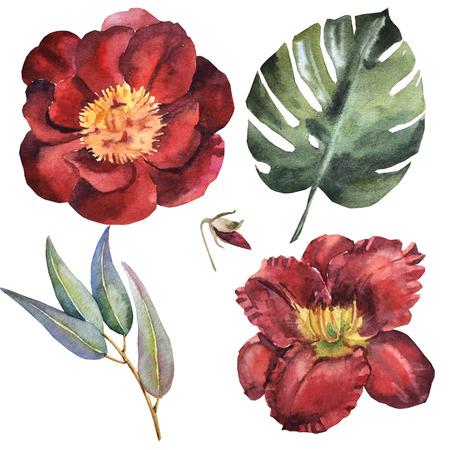 Watercolor maroon flower set