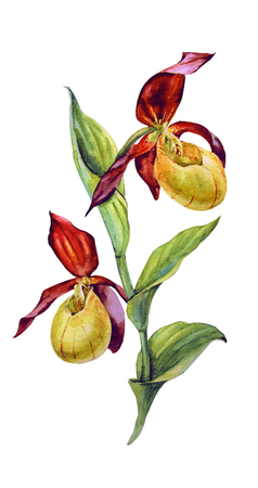 Watercolor Maroon and yellow orchid Archivio Fotografico - 109202699