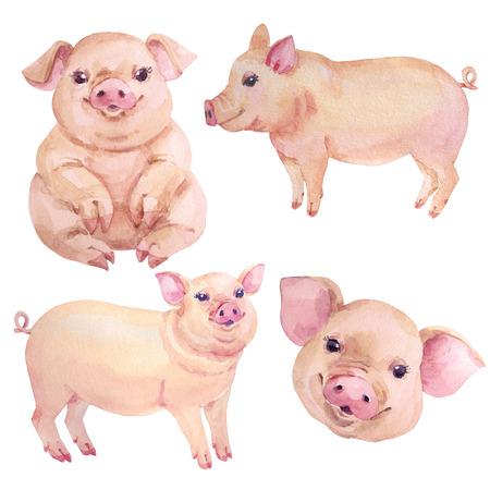 Watercolor pig christmas new year set Chinese symbol Archivio Fotografico - 109202746