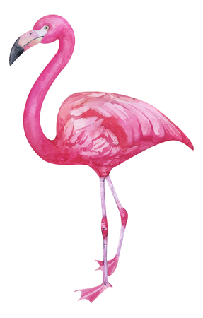 Watercolor hand painted pink flamingo. exotic bird standing on two legs. Tropical trandy bird with bright plumage isolated on white for fashion design etc Archivio Fotografico - 123365663