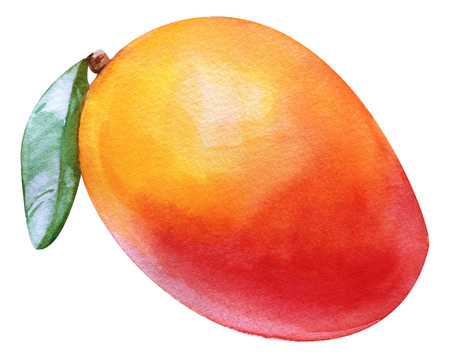 Watercolor red mango tropical. Isolated fresh exotic red mango fruit on white background. Artistic food Hand painted illustration. For design textiles, print or background Archivio Fotografico - 123365666