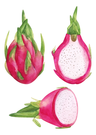 Watercolor hand painted pink dragon fruit. Jucy raw exotic Petahaya set. Tropical sweet fresh fruit isolated on white for menu and trendy design