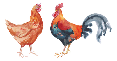 Watercolor hand painted rooster and red chicken. domestic birds with bright plumage isolated on white. Eco-friendly design for farms and farm products illustration Archivio Fotografico - 123365713