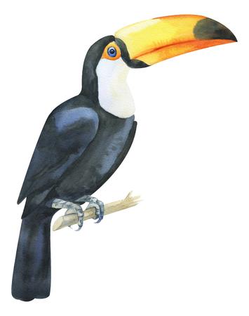 Aquarell handgemalter Tukan. Schwarz-weißer exotischer Vogel mit gelbem großen Schnabel auf Zweig. Tropischer Vogel isoliert auf weiß für trendiges Design