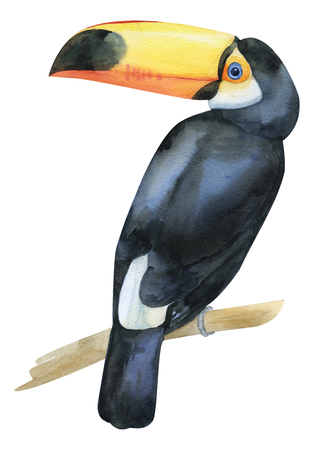 Watercolor hand painted toucan. Black and white exotic bird with yellow big beack on branch. Tropical bird isolated on white for trandy design Archivio Fotografico - 123365715