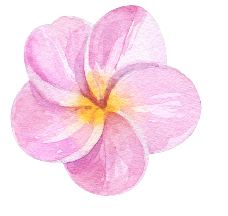 Watercolor hand painted pink plumeria. exotic fragrant flower. Tropical flower isolated on white for trendy design Stock Photo
