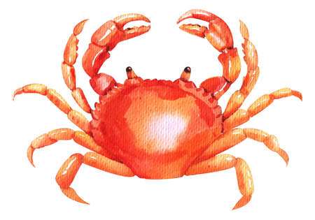 Watercolor crab. Fresh organic seafood illustration.