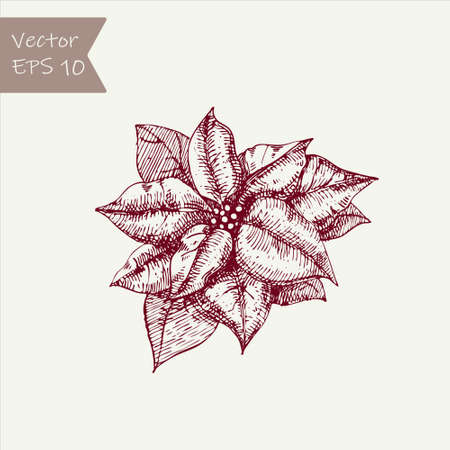 New Year and Christmas hand drawn plant, poinsettia flower. Vector Illustration holiday decorations in doodle style. Single hand drawn element of New Year and Xmas. Ilustração