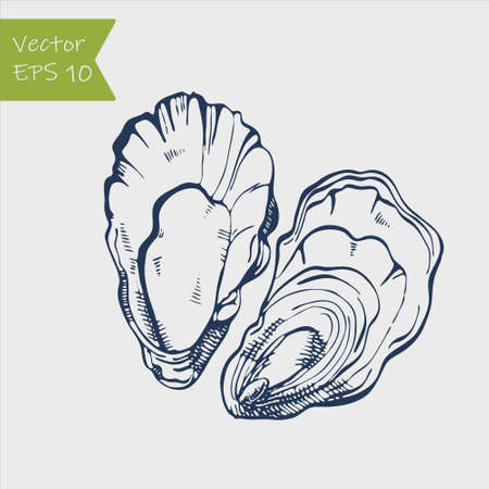 Fresh oysters vector set. Black and white graphic design. Sea food. Vector illustration. Hand drew oyster isolated on white background  イラスト・ベクター素材