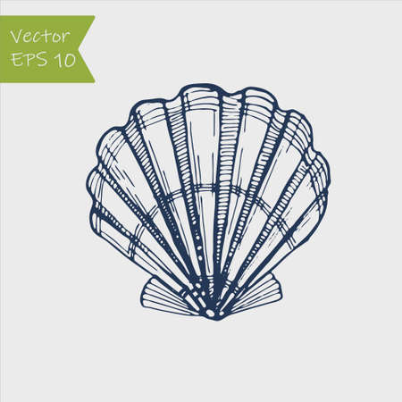 Black and white seashell. Hand drawn outline contour vector illustration of underwater scallop shell. Nautical element isolated on white background for cards, logo, decoration, coloring books, print