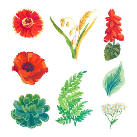 Hand painted acrylic or gouache floral elements set on white background