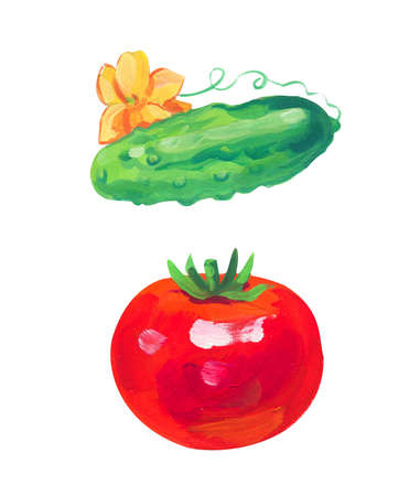 tomato and cucumber. Hand drawn acrylic or gouache illustration on white background
