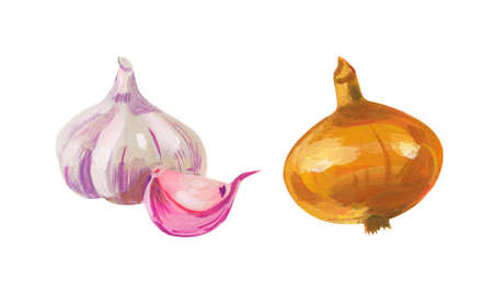 Onion and garlic. Hand drawn acrylic or gouache illustration on white background 版權商用圖片