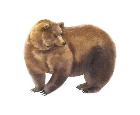 Watercolor brown bear animal illustration isolated on white 版權商用圖片