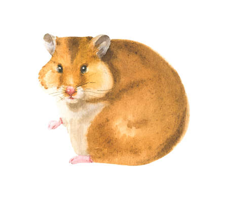Watercolor illustration of a hamster in white background. Animal silhouette watercolor sketch. Wildlife art illustration. Vintage graphic for fabric, postcard, greeting card, book, poster, tee-shirt 版權商用圖片