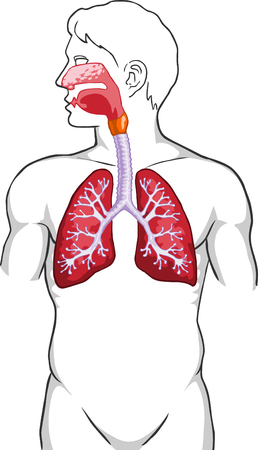 Lungs Stock Vector - 4425538