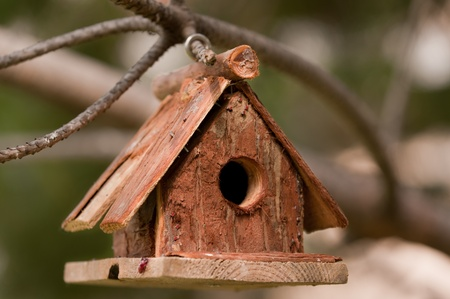 Little bird house on the branch of the tree photo