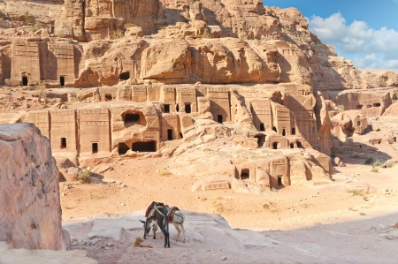 Two pack mules in Ancient Petra city Jordan photo