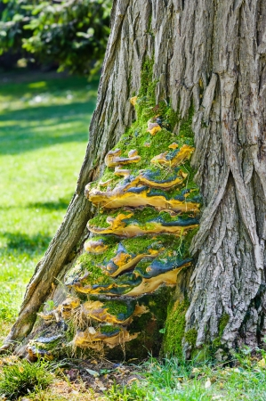 Blight infected tree in the garden Stock Photo